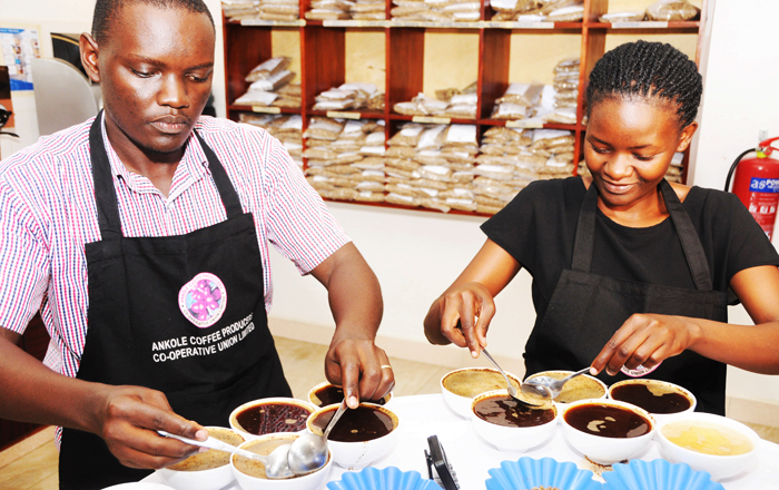 Ankole_Coffee_Producers_Cooperative_Union_Limited_impact1